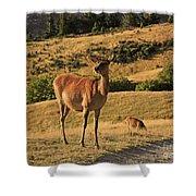 Deer On Mountain 2 Shower Curtain