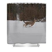 Deer Run Shower Curtain