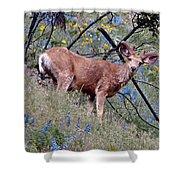 Deer Standing In Wildflowers Shower Curtain