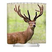 Deer With Antlers, Harrogate Shower Curtain