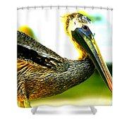 Deerfield Pelican Shower Curtain