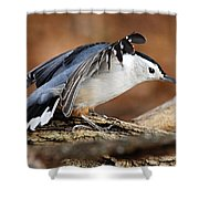 Defiant Nuthatch Shower Curtain