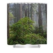 Del Norte Redwoods Shower Curtain