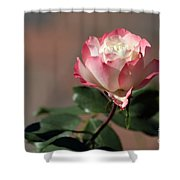 Delany Sister Shower Curtain