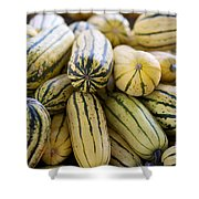 Delicata Winter Squash Shower Curtain