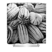 Delicata Winter Squash In Black Shower Curtain