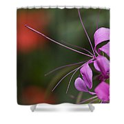 Delicate Blossom Shower Curtain