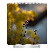 Delicate Bursts Of Purple Shower Curtain