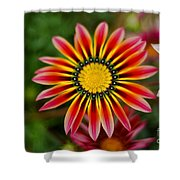 Delicate Designs Shower Curtain
