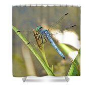 Delicate Dragonfly Shower Curtain
