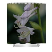 Delicate Lillies Shower Curtain