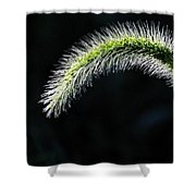 Delicate - Greeting Card Shower Curtain