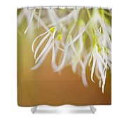 Delicate Petals Shower Curtain