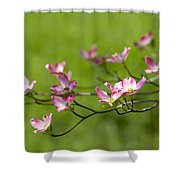 Delicate Pink Dogwood Blossoms Shower Curtain