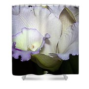 Delicate Purple Orchid Shower Curtain