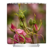 Delicate Renewal Shower Curtain