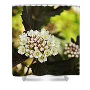 Delicate Spring Bloom Shower Curtain