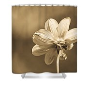Delicate Wings Shower Curtain