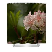 Delicately Peach Shower Curtain