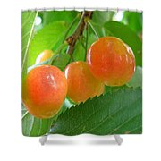 Delicious Plums On The Branch Shower Curtain