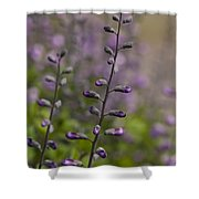 Delphinium Haze Shower Curtain