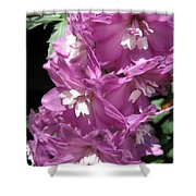 Delphinium Named Magic Fountains Lilac Pink Shower Curtain