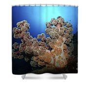 Dendronephthya Soft Coral, Acasta Reef Shower Curtain