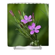 Deptford Pinks Dsmf182 Shower Curtain