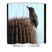 Desert Bird Atop Saguaro Shower Curtain