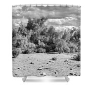 Desert Cloud Bw Palm Springs Shower Curtain