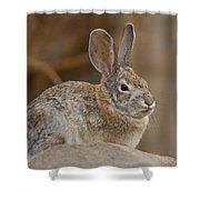Desert Cottontail Rabbits Shower Curtain