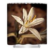 Desert Easter Lily Shower Curtain