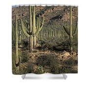 Desert Guardians Shower Curtain
