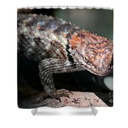 Desert Lizard Shower Curtain
