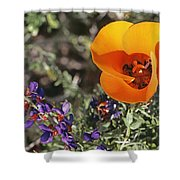 Desert Mariposa Tulip & Coulters Shower Curtain