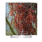 Desert Mistletoe Berries Shower Curtain