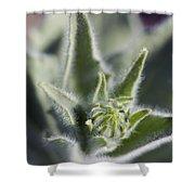 Desert Sunflower Geraea Canescens Bloom Shower Curtain