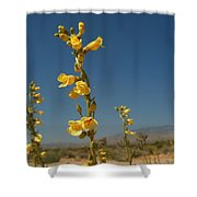 Desert Sweetpea Shower Curtain