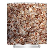 Desert's Collection Of Dried Flowers 2 Shower Curtain