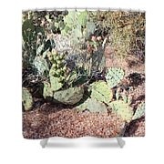 Desert's Collection Of Dried Flowers 3 Shower Curtain