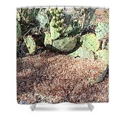 Desert's Collection Of Dried Flowers1 Shower Curtain