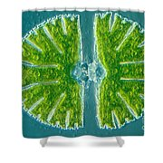 Desmid Algae Shower Curtain