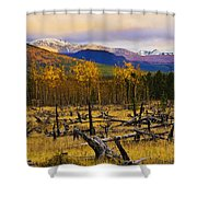 Destruction And Re-growth After Forest Shower Curtain