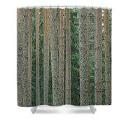 Detail Of Arrow-straight Evergreen Shower Curtain