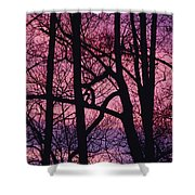 Detail Of Bare Trees Silhouetted Shower Curtain