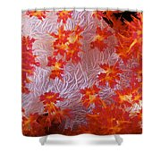Detailed View Of Soft Coral Revealing Shower Curtain