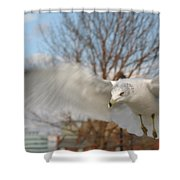 Determined Gull Shower Curtain