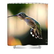 Determined Hummingbird Shower Curtain
