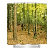 Devils Glen Woods, County Wicklow Shower Curtain