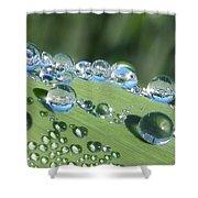 Dew Beads Shower Curtain